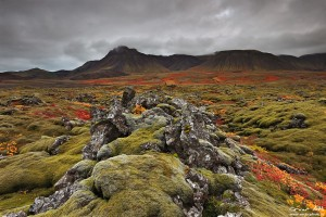 Vífilfell Lava Fields in Fall Colors