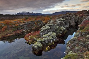 Lava Fields of Þingvellir National Park in Fall Colors.