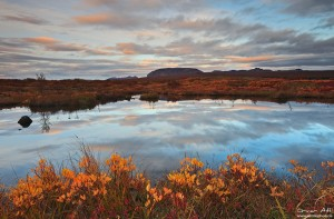 Evening Light Reflected in a Pond at Þingvellir National Park in Fall Colors..