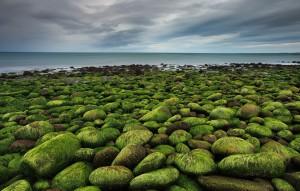 Green Rocks at Hvarleyri near the Town of Hafnarfjörður.