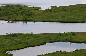 Layers of Greeen - Þingvellir