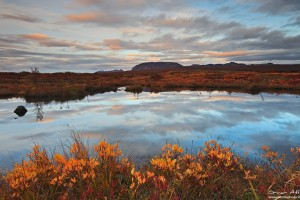 Evening Light Reflected in a Pond at Þingvellir National Park in Fall Colors.